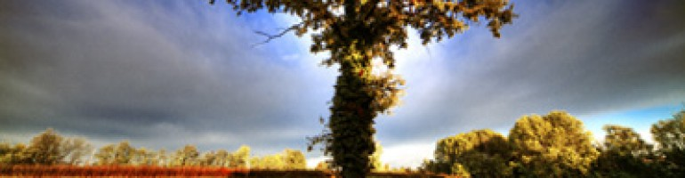 cropped-tree.jpg